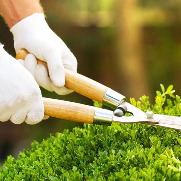 manutenzione giardino delta service